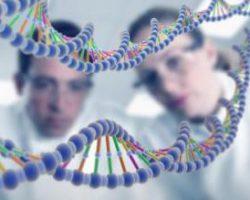 В ДНК человека обнаружили второй спрятанный ретровирус