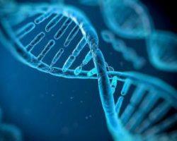 Модифицированные гены могут восстановить детский иммунитет